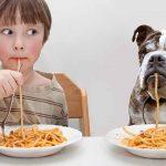 Tészták kutyák számára – Mikor, és hogyan kell adni kutyáknak a tésztát